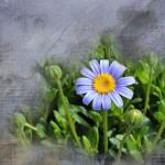 Primavera della Psicologia a Trecenta – seconda edizione