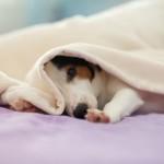 5 cose che i cani ci insegnano sul nostro benessere