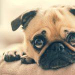 Ansia e attacchi di panico: quando chiamare la psicologa?