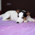 Il cucciolo garbato: una riflessione sugli stereotipi di genere
