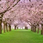 Primavera della Psicologia a Trecenta