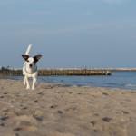 (Ri)trovare consapevolezza e serenità nella relazione con il tuo cane